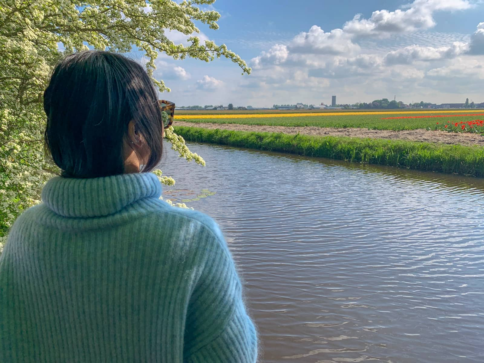 A woman with dark hair, wearing a blue sweater, facing away from the camera and looking out over a small river and towards fields of red, yellow and pink tulips