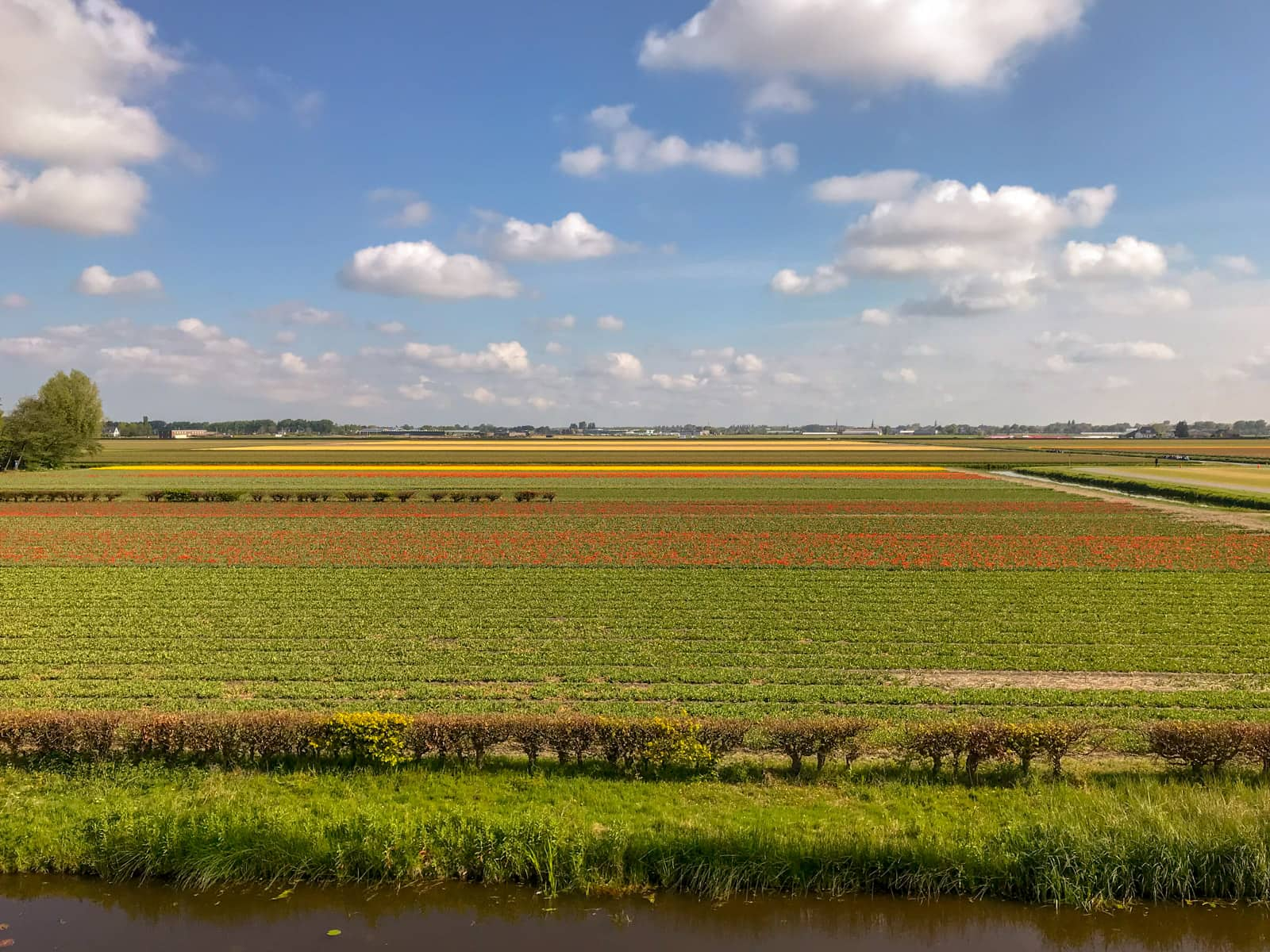 Wide, bright fields of tulips in red, and yellow, seen from a distance. The sky is blue with some small clouds