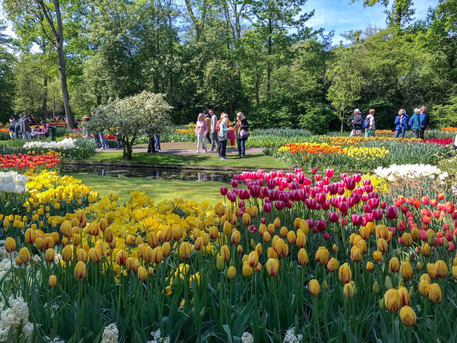 A very green garden with many plantations of neon-coloured tulips in red, pink, orange, yellow, and white. There are some people walking around observing the tulips