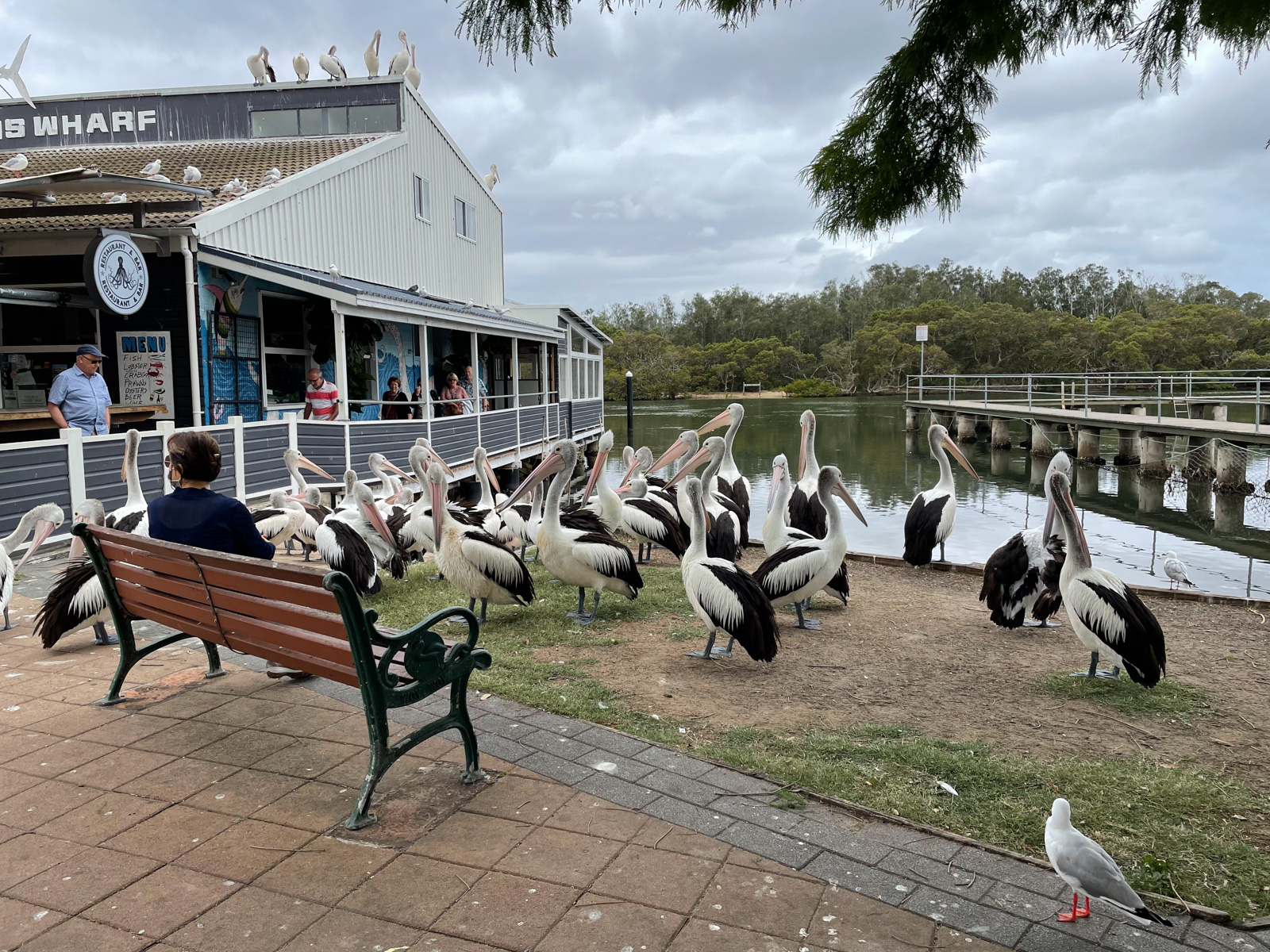 A group of pelicans perched on the grass near a fish and chip shop on the water. A boardwalk can be seen going along the water