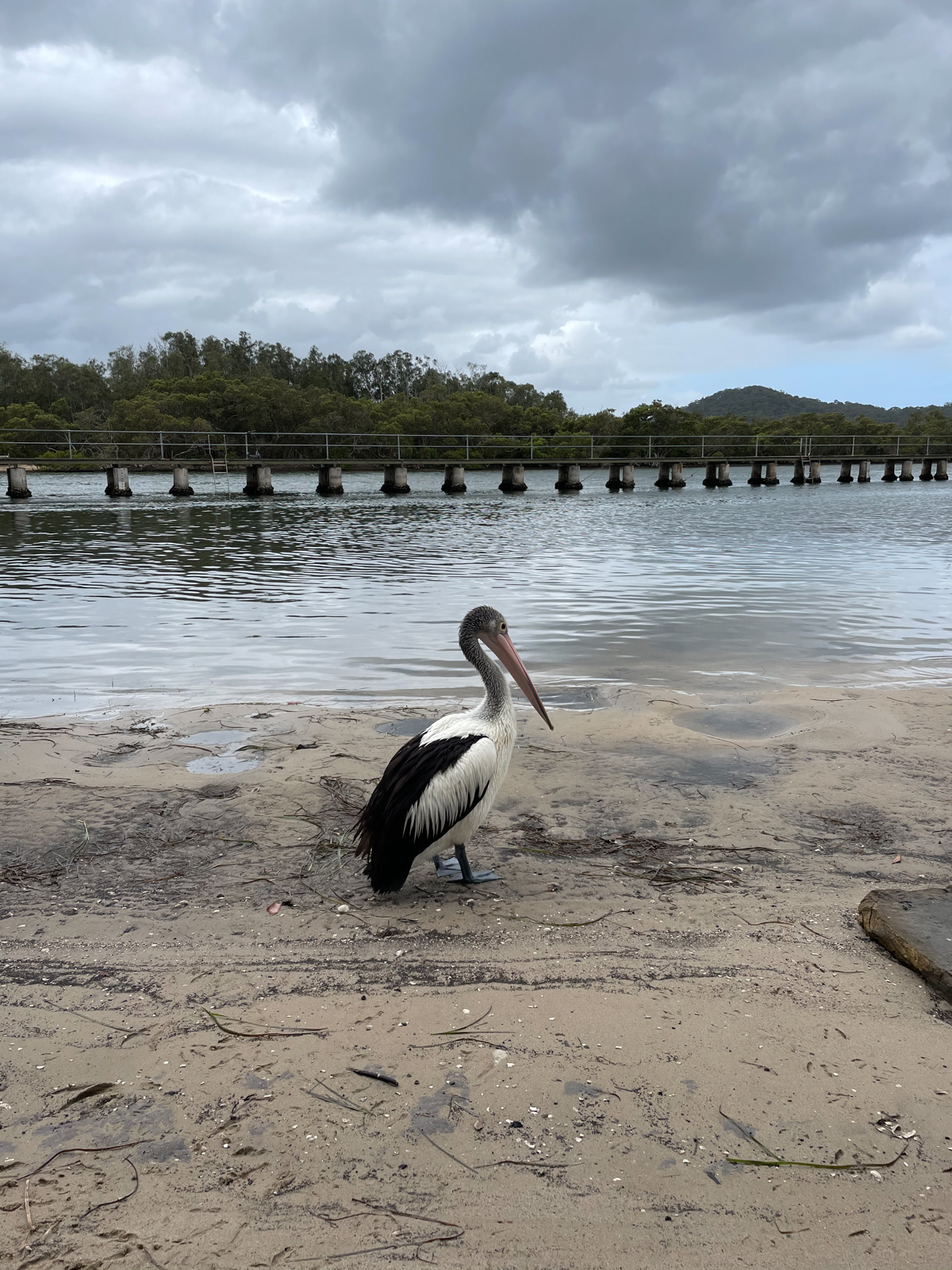 A pelican perched on dirty sand by a big lake. Over the lake is a raised boardwalk.