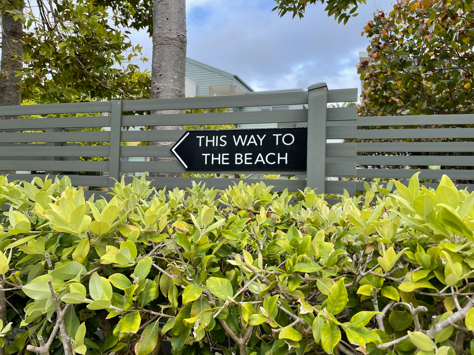 "A hedge in front of an olive green painted wooden fence, with a black sign on it with an arrow and text reading, ""This way to the beach""."