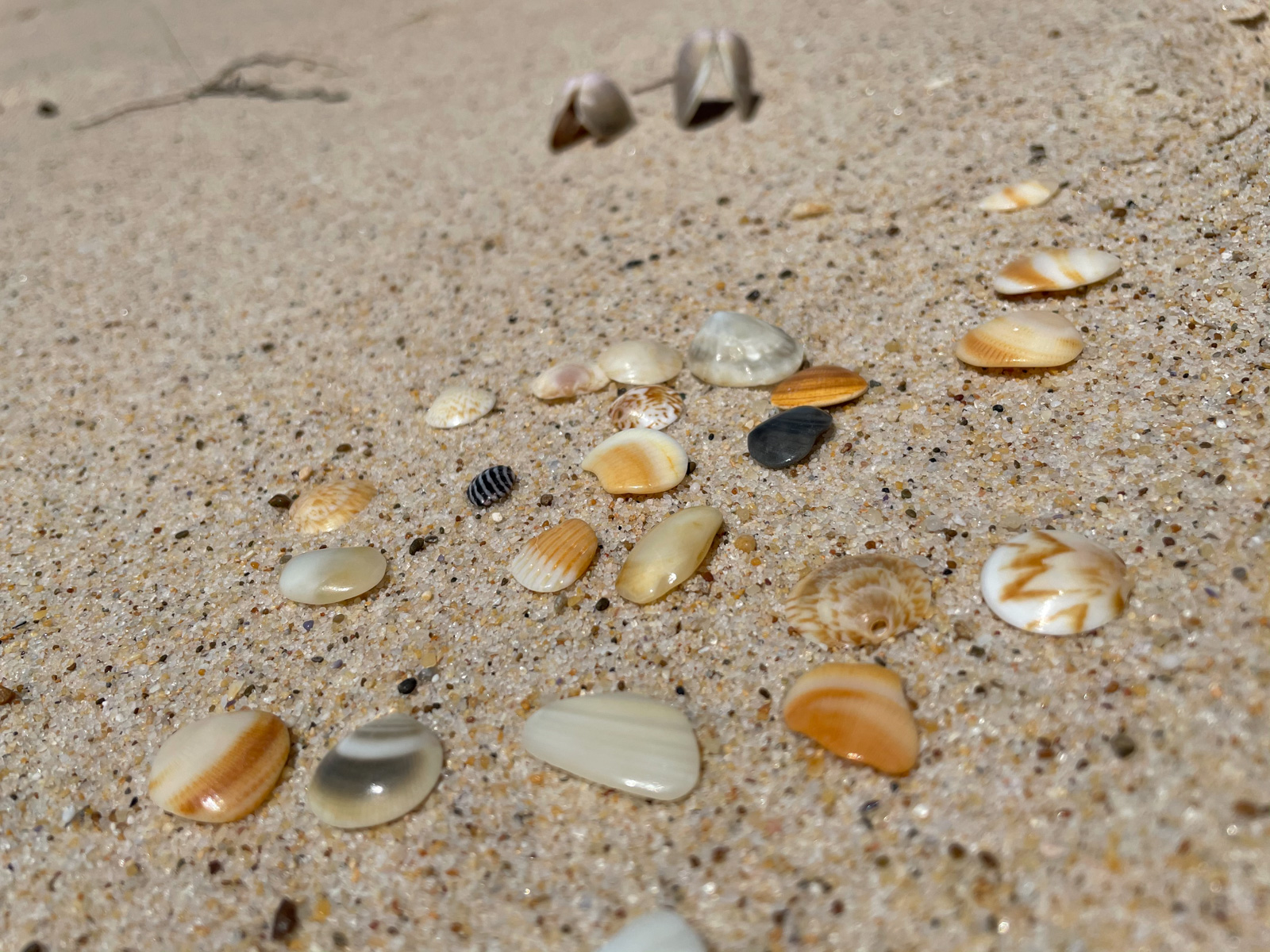 Various small seashells in different colours, laid out on a bed of sand on the beach.