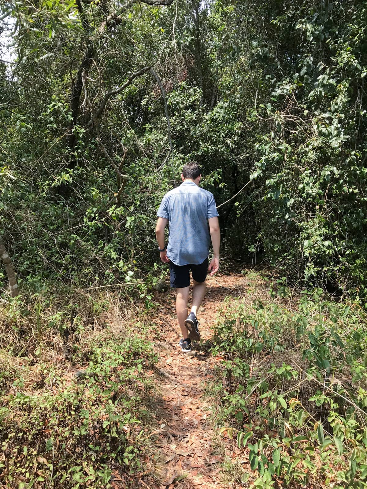A man from behind, wearing a blue shirt and dark shorts. He is walking down a path into a bush