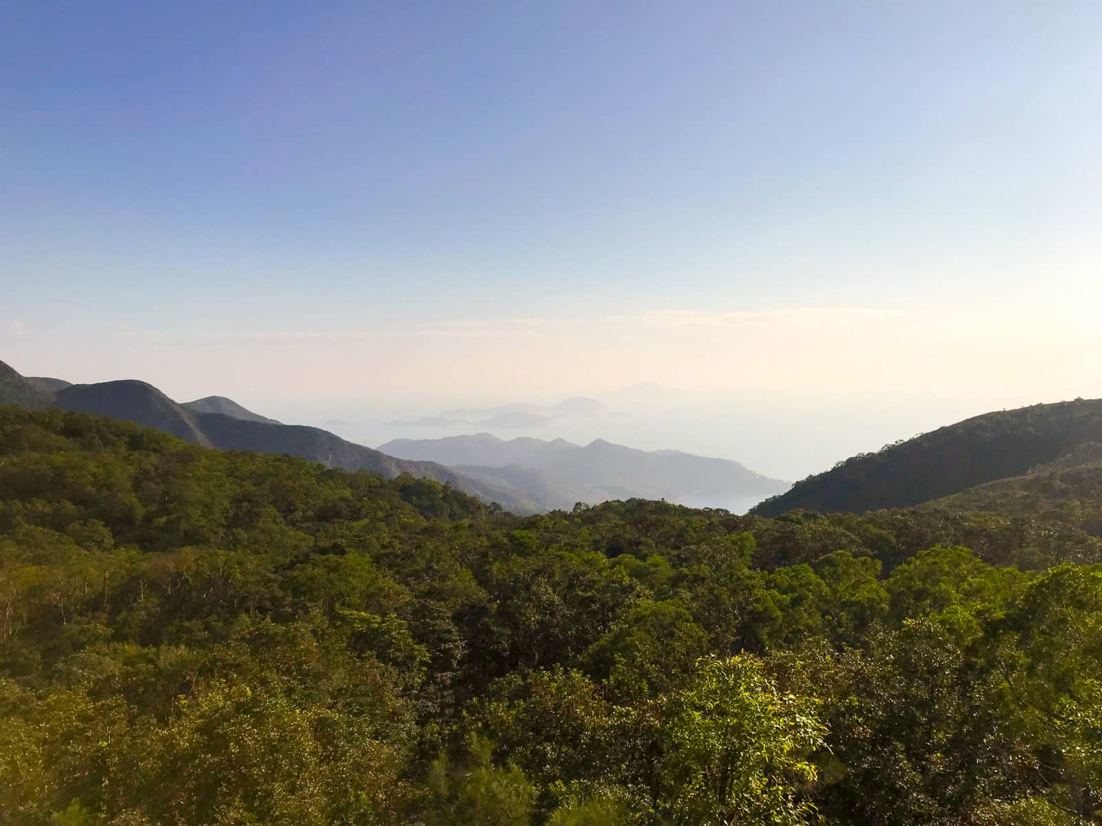 A view of blue sky and many trees, with some low mountains in the distance
