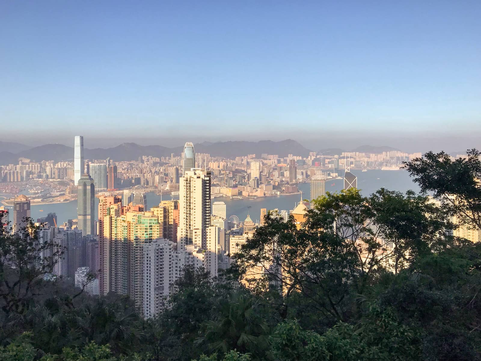 A view of the city of Hong Kong from a high vantage point, with some shadowed trees in the lower foreground.