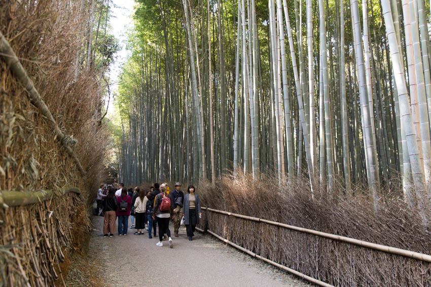 Arashiyama bamboo rainforest