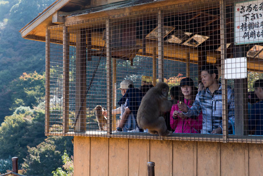 The feeding cage for the monkeys with some people inside