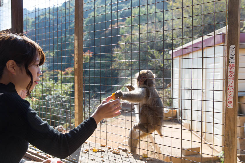 A girl holding a piece of food out to a monkey through the cage