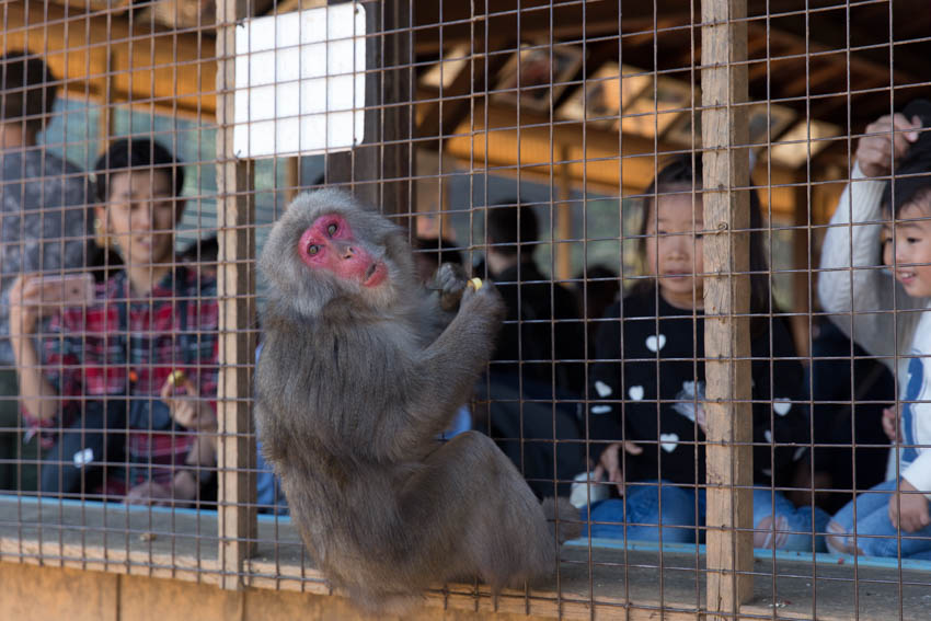 A monkey making a face as it hangs off the cage