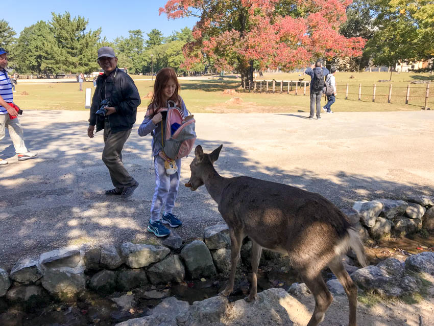A red-haired girl with an open backpack keenly feeding a deer