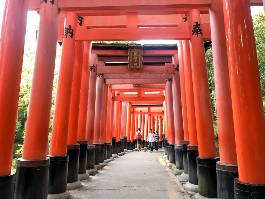 Some of the torii gates at Fushimi Inari-Taisha