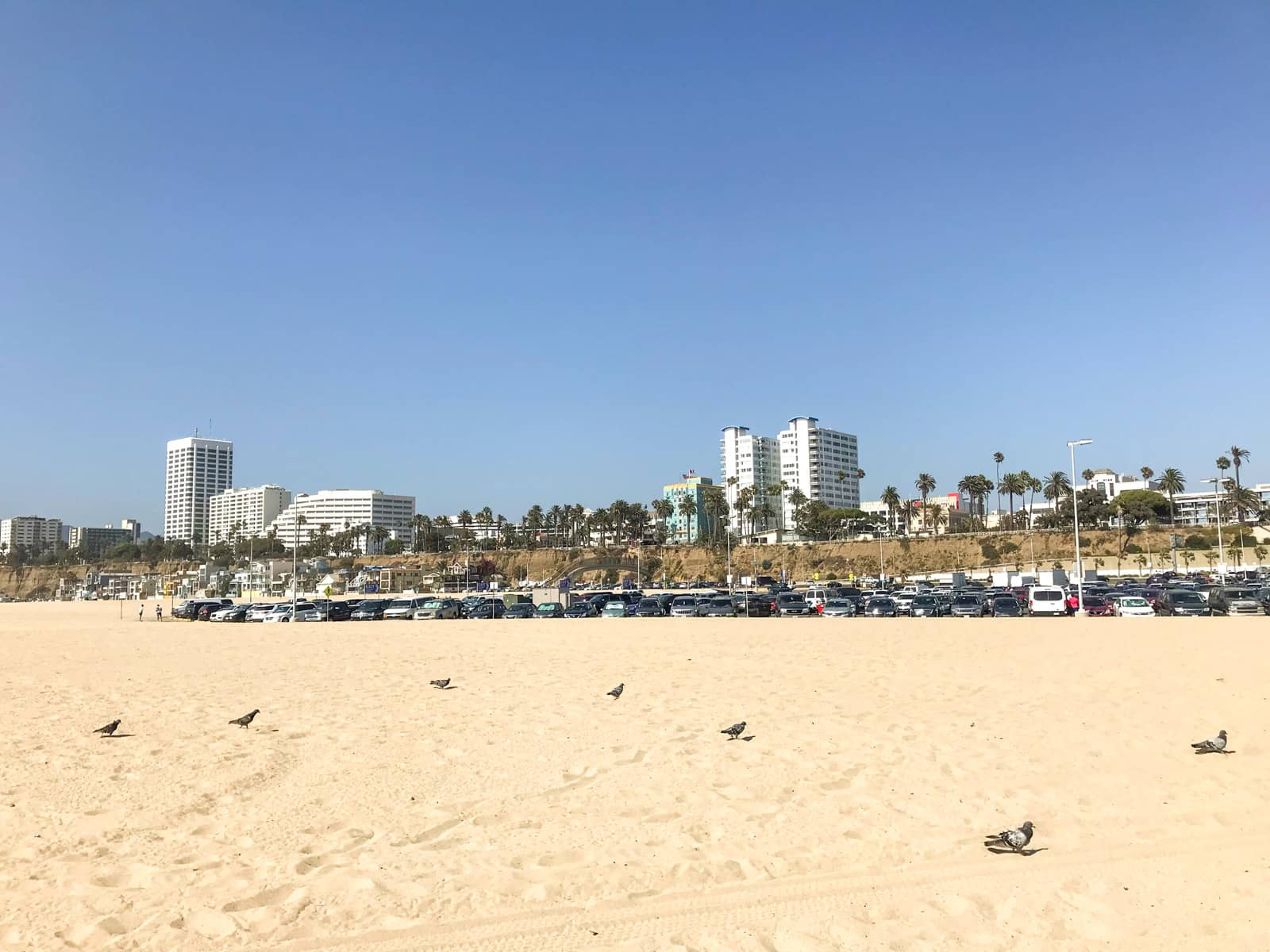 A yellow-sand beach with small pigeons standing on the sand, all spread out. In the distance is the city of Los Angeles, with a parking lot for the beach closer to the foreground. It is a sunny day with clear blue skies