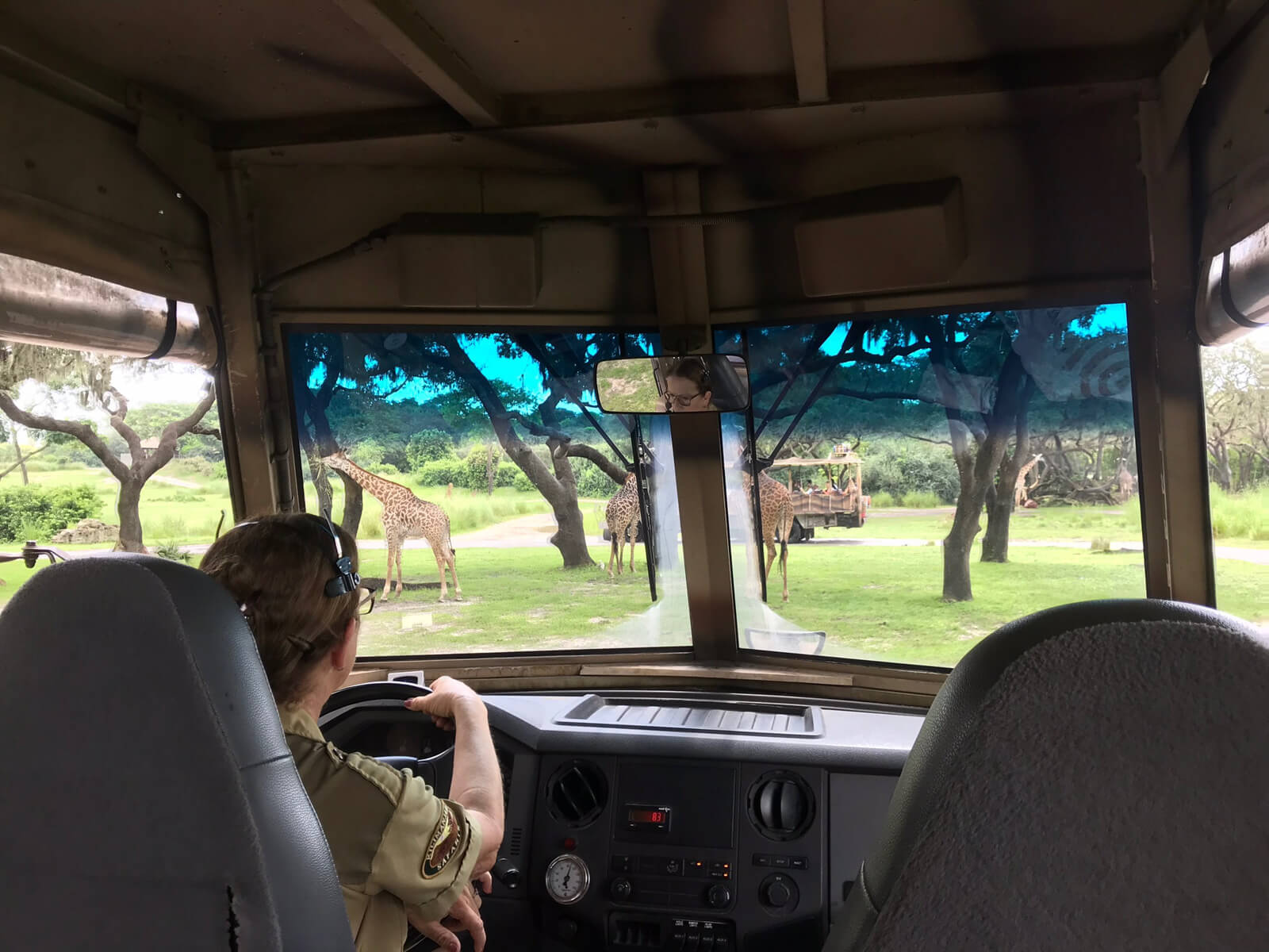 The inside of a vehicle looking out the front window. There is a woman in the driver's seat on the left. Giraffes can be seen through the window