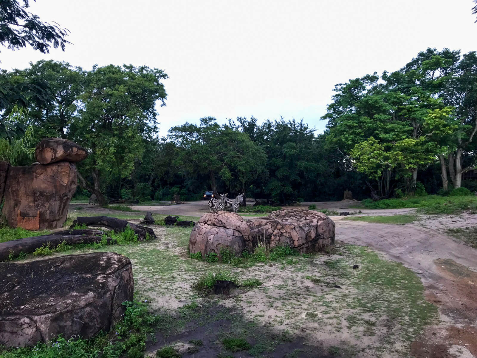 Barren terrain with some large rocks, trees in the background, and some zebras centre of frame but in the distance
