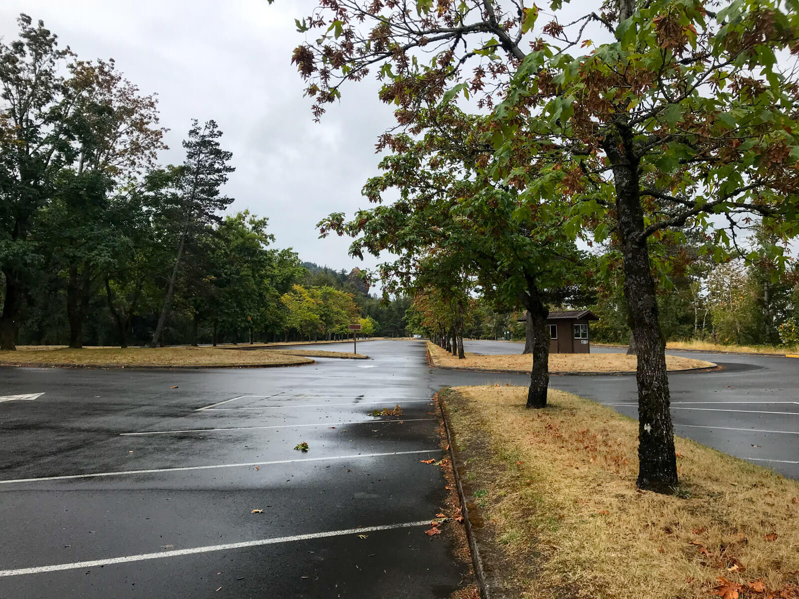 An empty parking lot. The ground is wet, presumably from rain. There are barren looking trees in the median strips