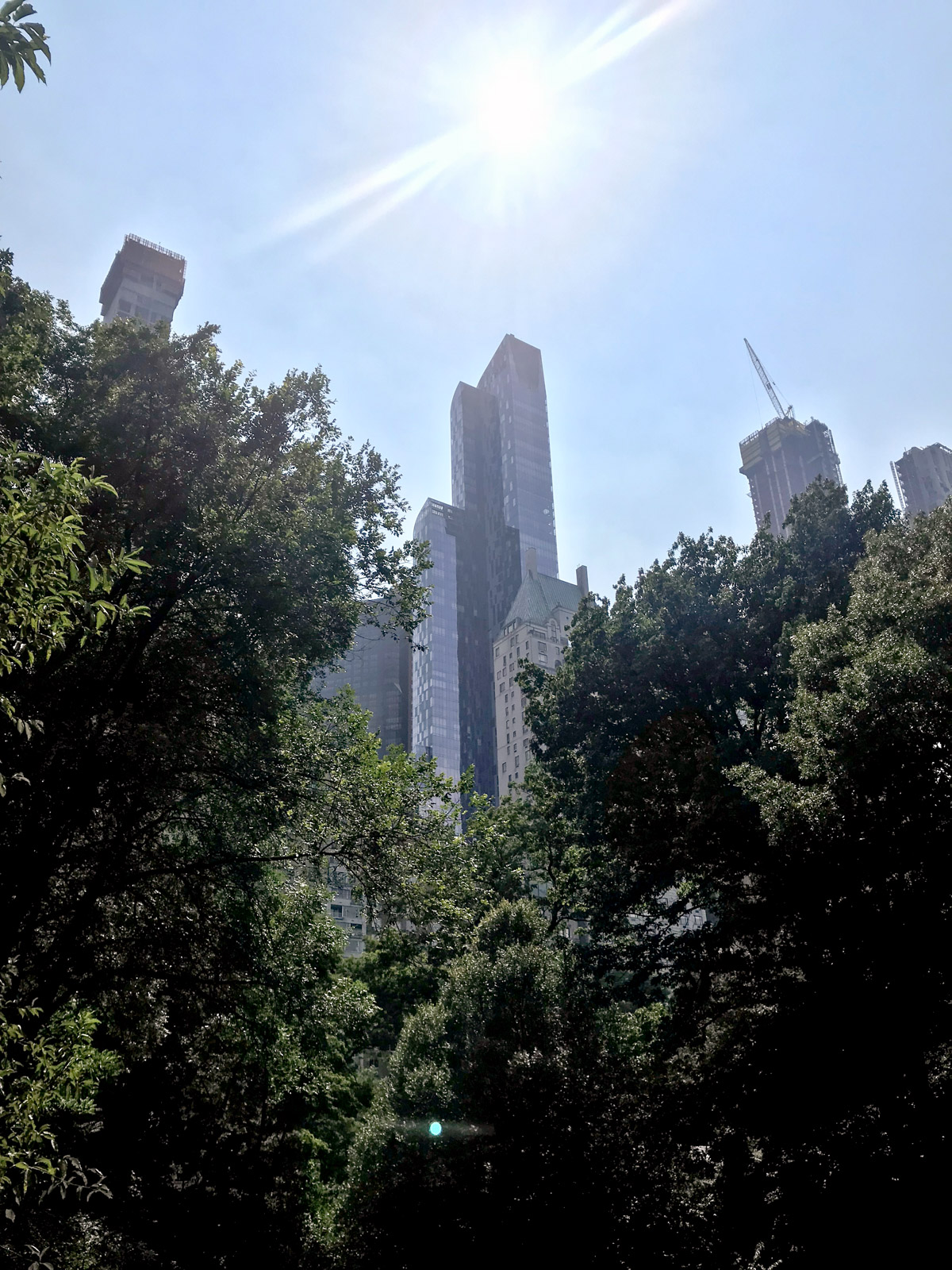 A low angle shot of trees in a park, in the background are very tall skyscrapers.