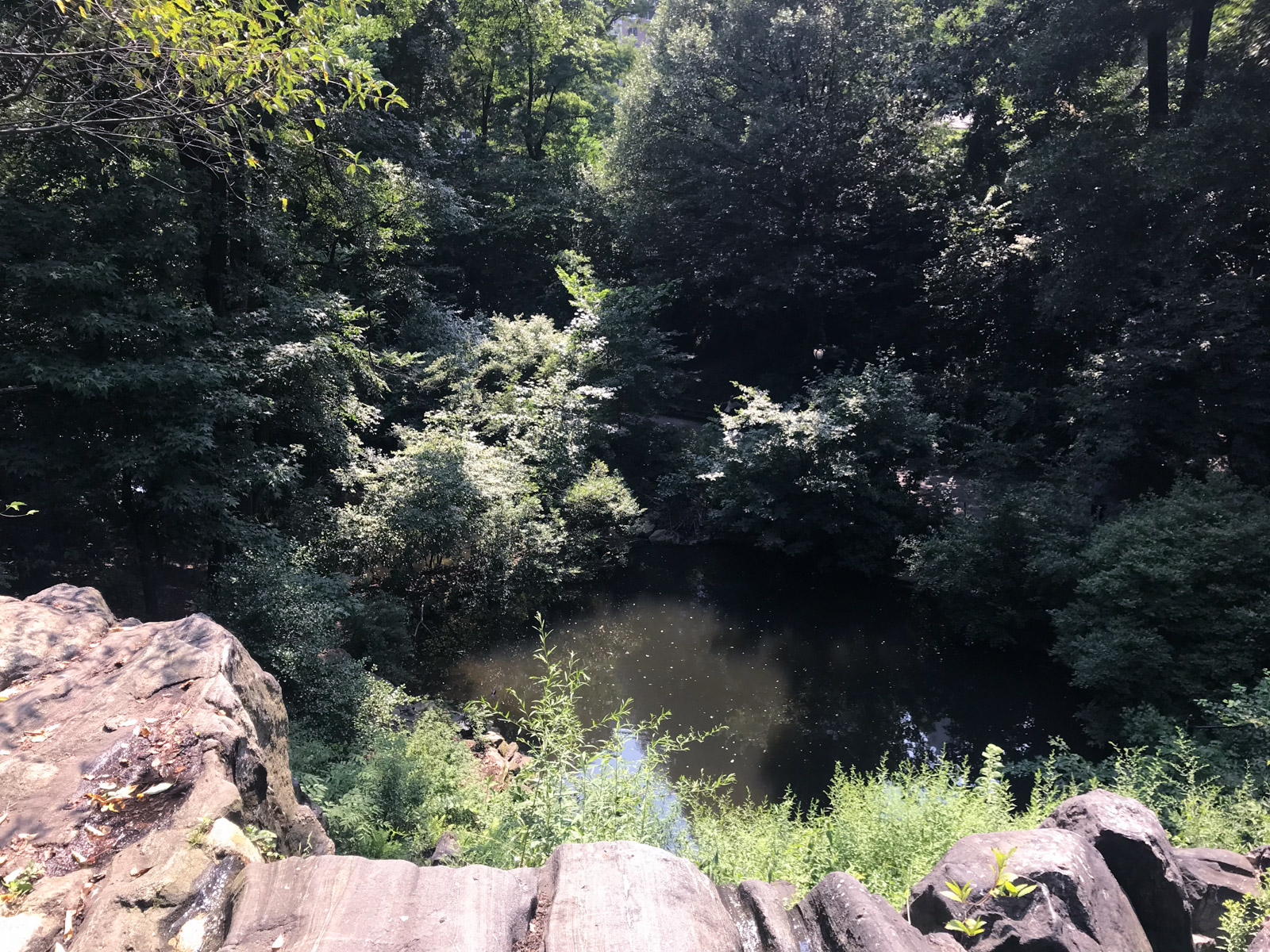 A pond as seen from the edge of a small cliff. Surrounding the water are many trees