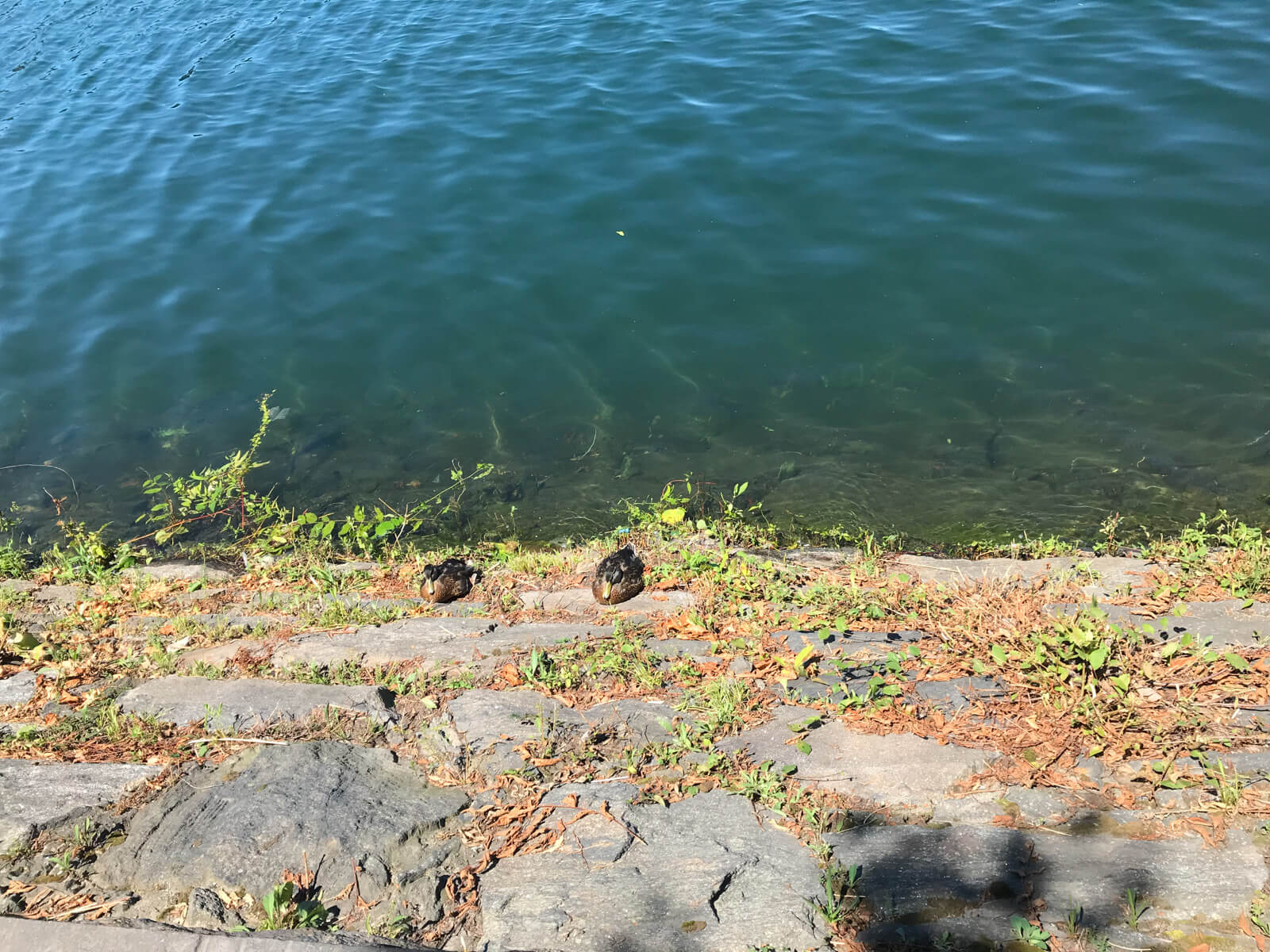 Two small ducks sitting on a rocky stone area at the edge of a body of water