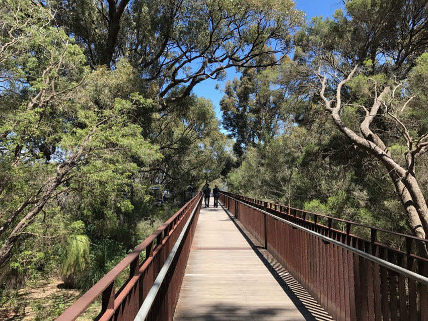Beginning the walk down the Lotterywest Federation Walkway, a wooden bridge