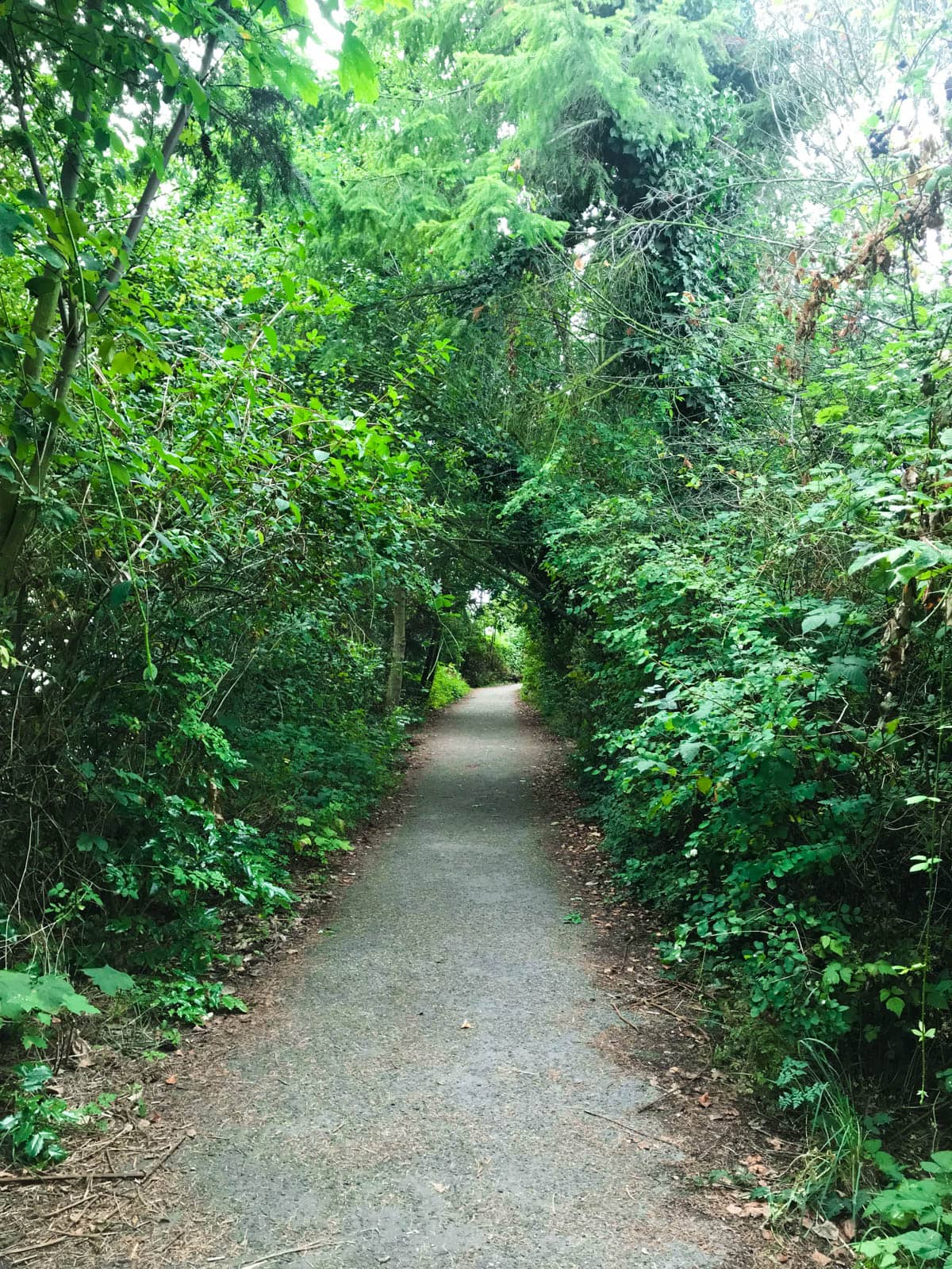 A view down a walking trail with green trees and bushes on either side.