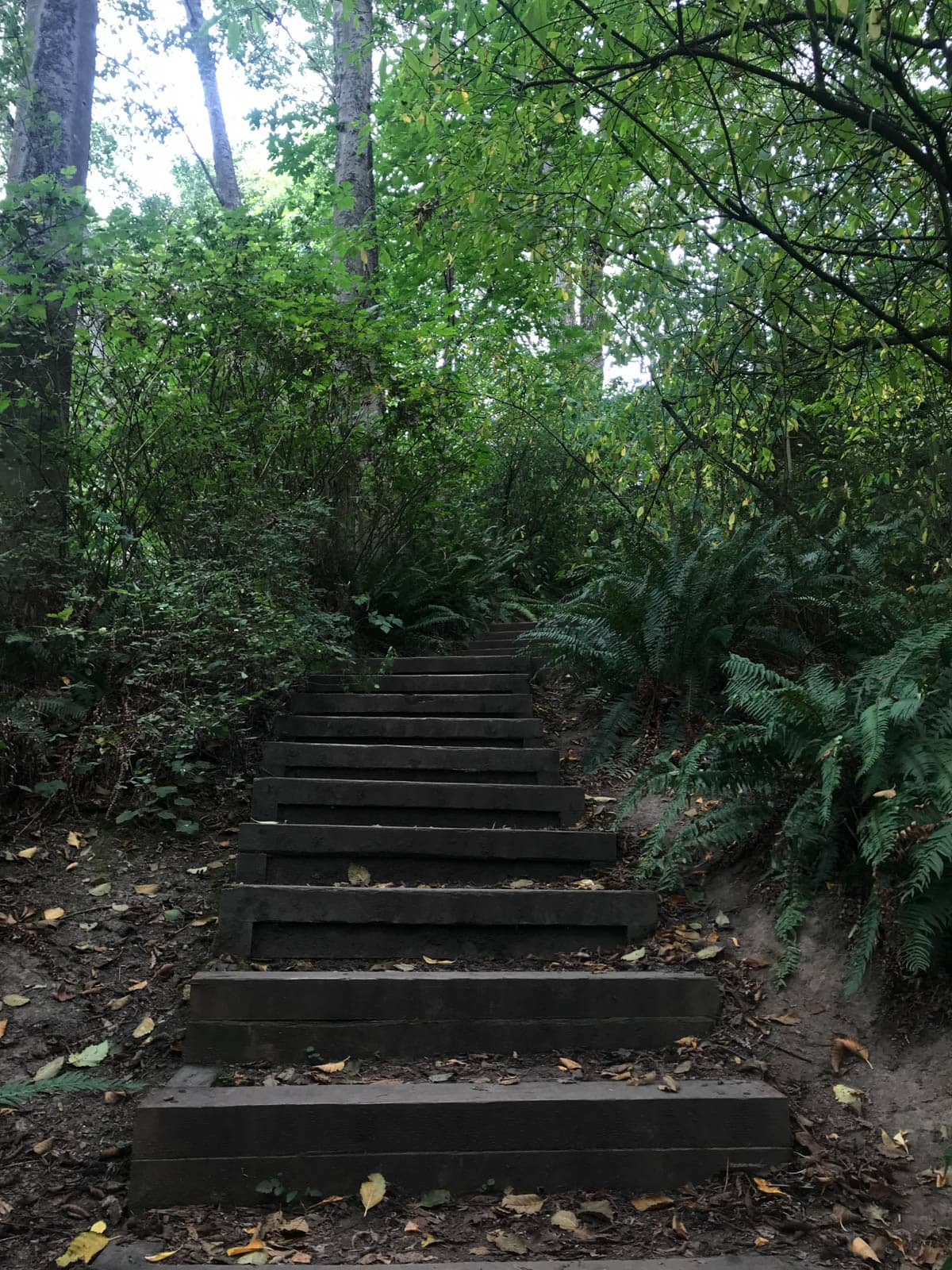 Wooden stairs as part of a walking trail, leading upwards. The canopy provides adequate shade.