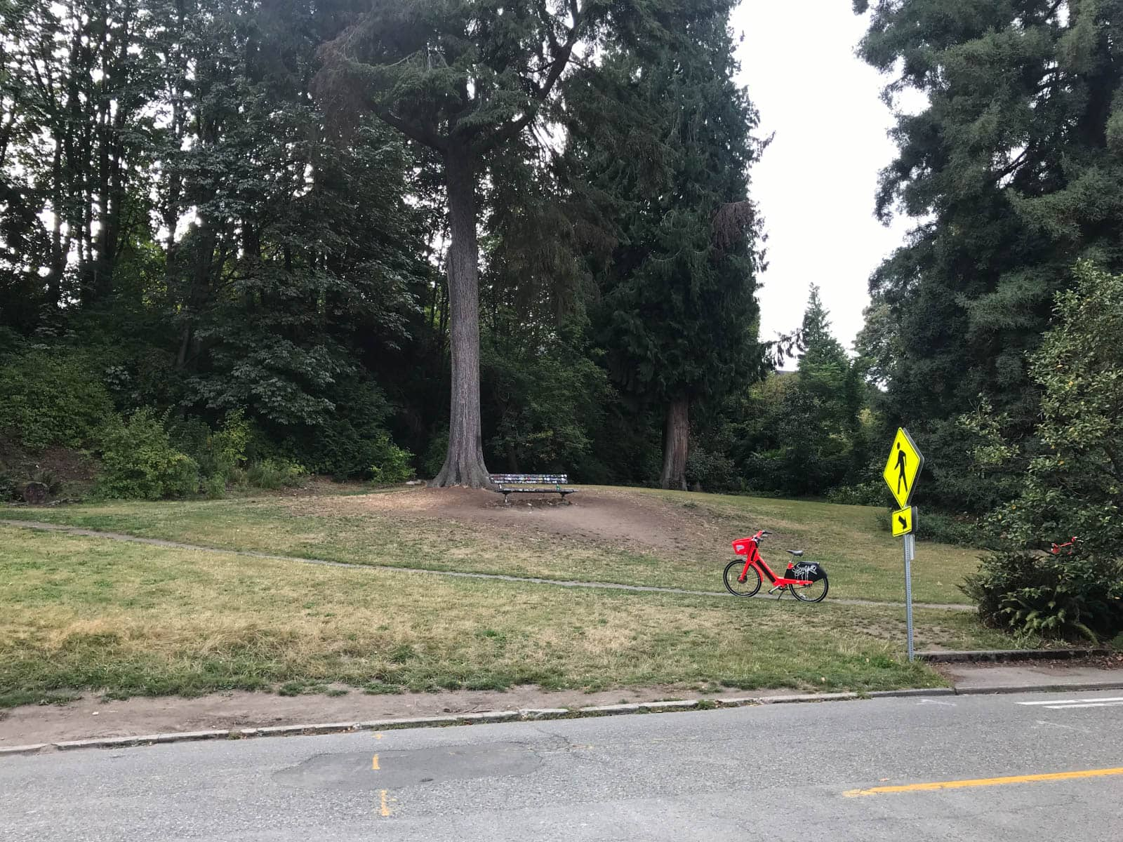 A park with open space, one big tree and a lone bench with one path across the front of it. There is a bright red bike on the path.