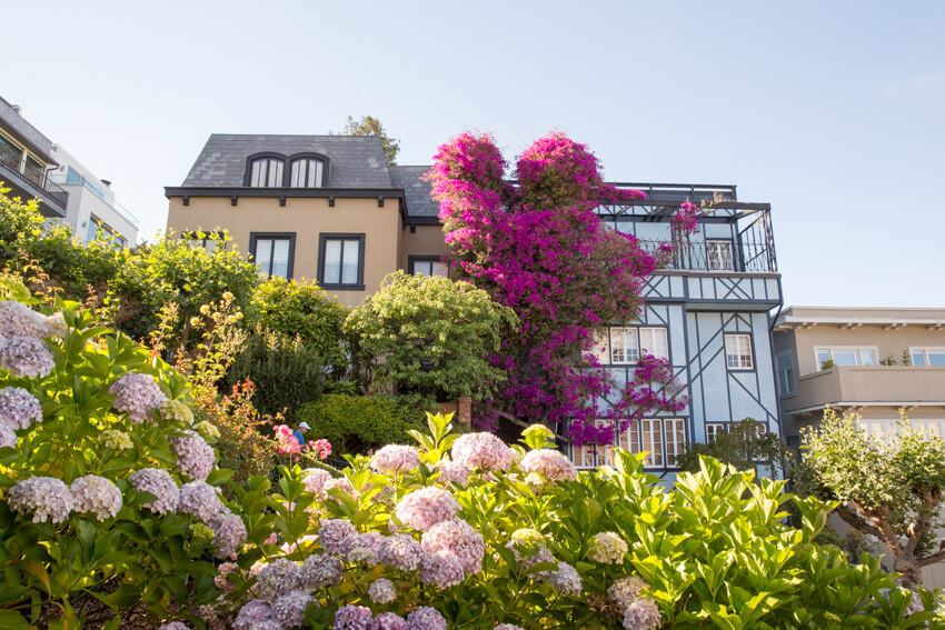 A fall beige house and blue-grey house next to each other, almost concealed by green trees, shrubs, and pink flowers in front of it. A climbing plant with fuchsia flowers covers part of the space between the two houses.