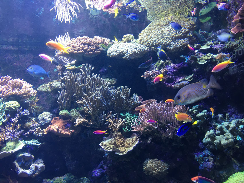 A range of fish at the SEA Aquarium