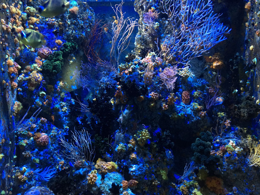 An assortment of coral at the SEA Aquarium