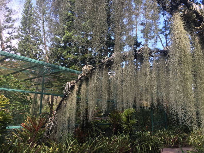 Thin, hanging plants in the Botanic Gardens