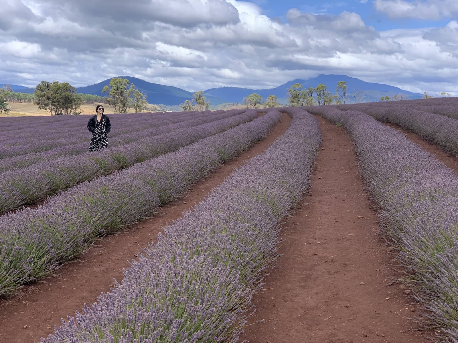 More distinct rows of lavender, with a woman in a black patterned jumpsuit just behind one of the rows