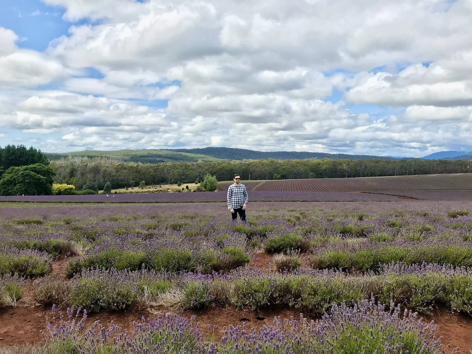 A man wearing a plaid shirt, wearing sunglasses, and a hand in his pocket, standing in a very big lavender field. The sky is blue but full of clouds