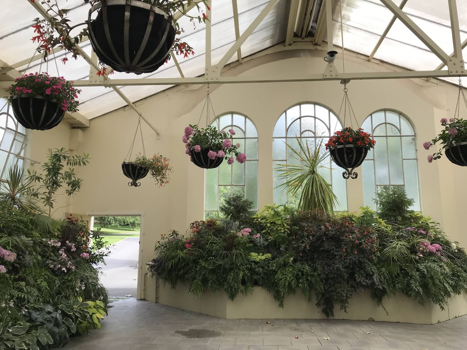 The inside of a conservatory with hanging plants and glass windows