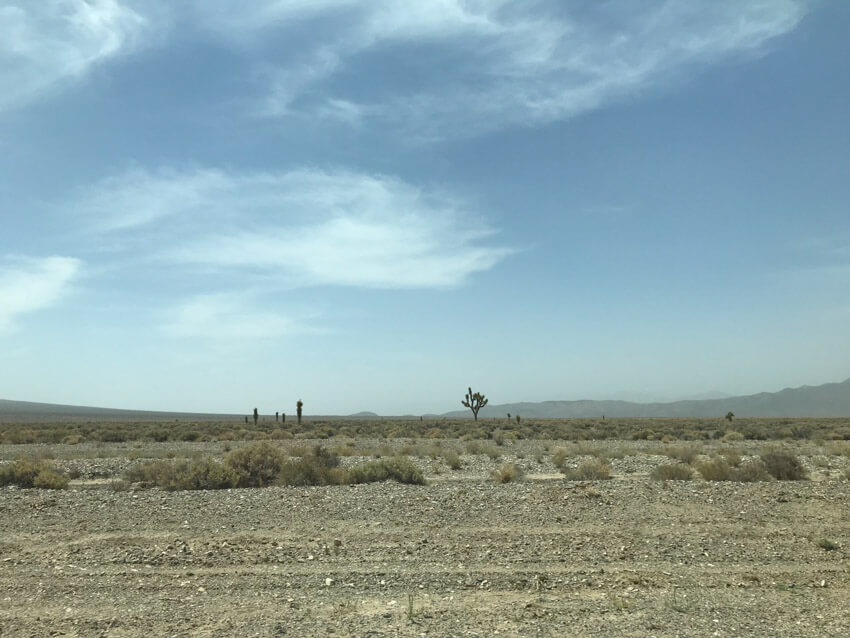 Gravel-like terrain scattered with light-coloured shrubs. In the distance some Joshua trees can be seen. The sky is a dusty blue-grey.