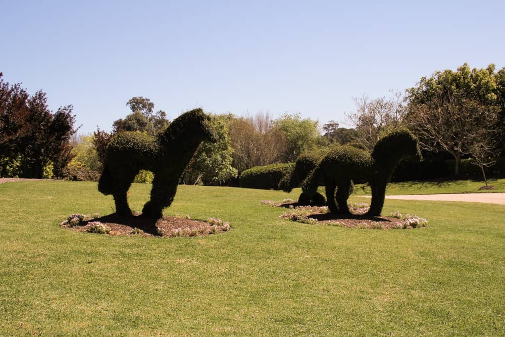 Some hedges cut into the shape of running horses