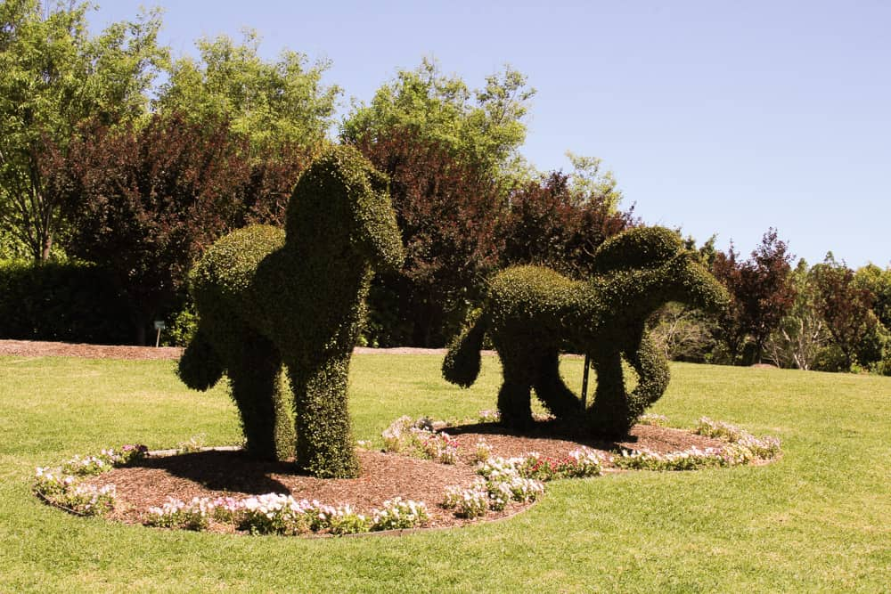 Front view of the animal hedges