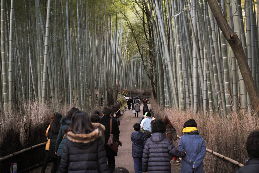 People walking through the bamboo forest
