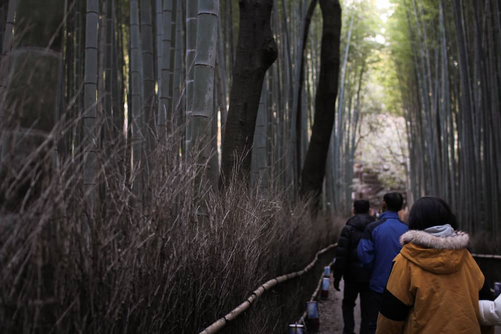 Another view of the bamboo forest