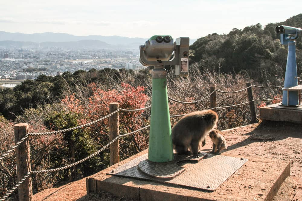 A monkey by a pair of lookout binoculars
