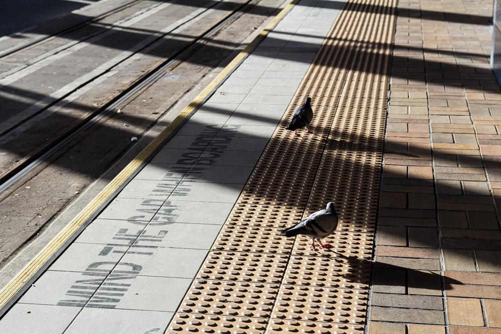 Ordinary pigeons