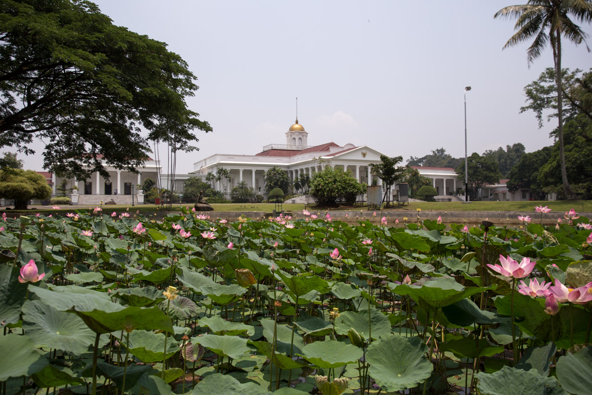 Water lilies with a president's house in the background