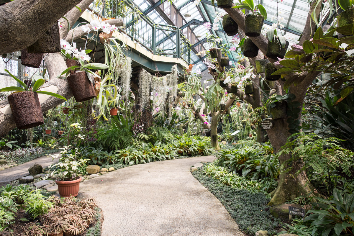 A view of the orchid glasshouse