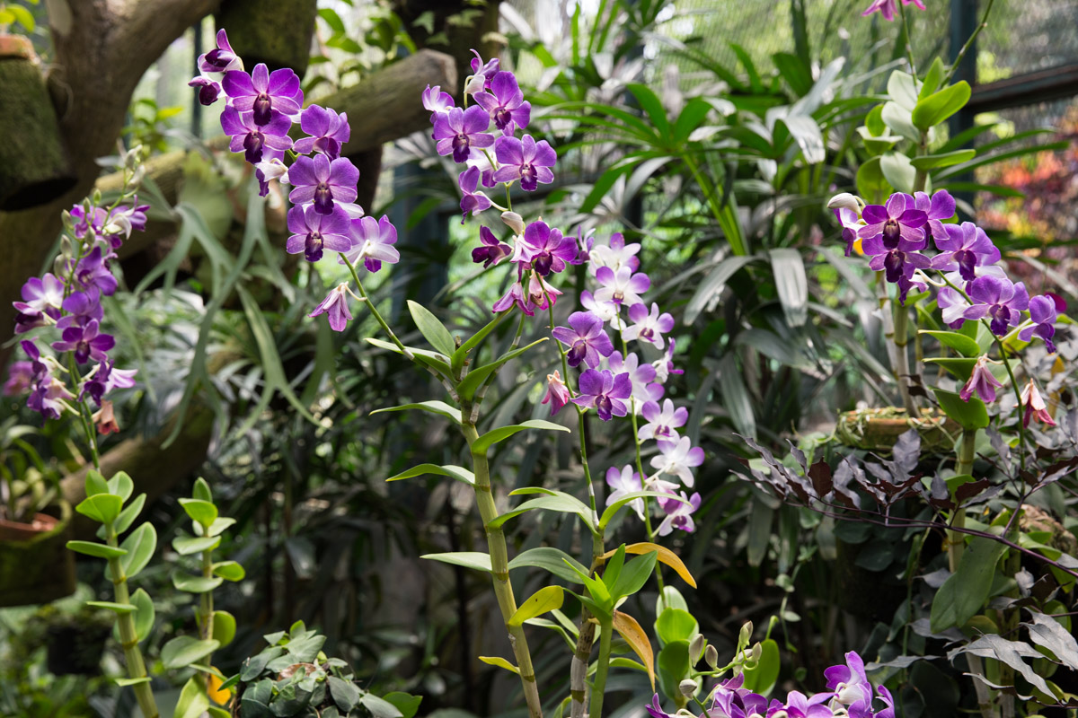 Bright purple orchids
