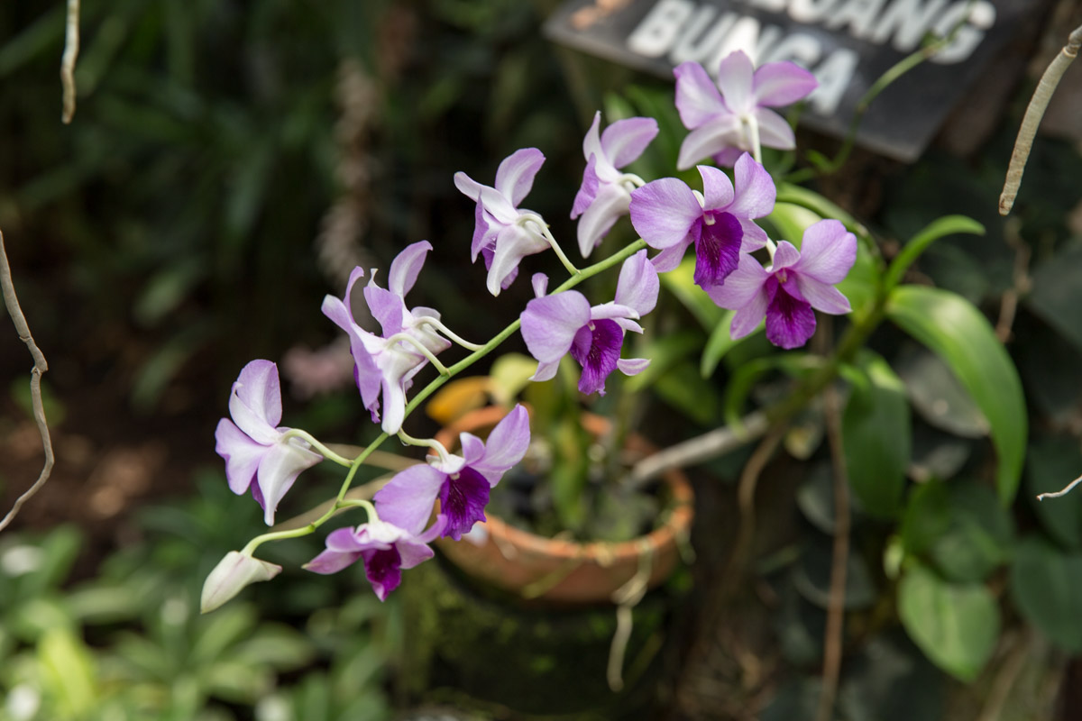 More purple orchids, another shade of purple this time