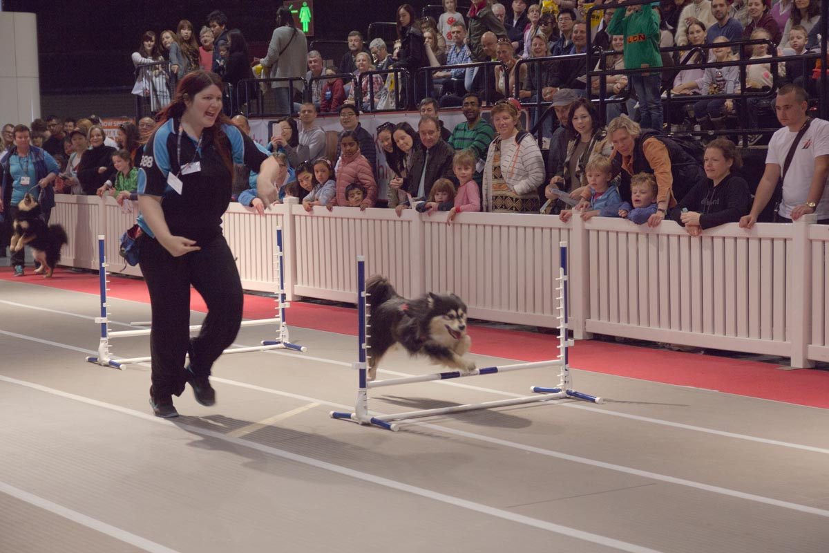 Another dog jumping over a hurdle