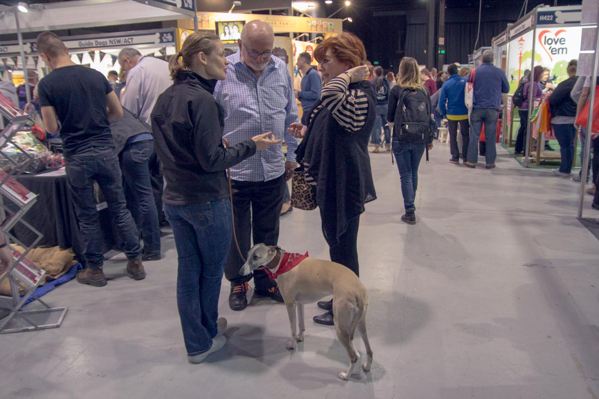 People who were part of the shows were allowed to bring their dogs – this one is a whippet