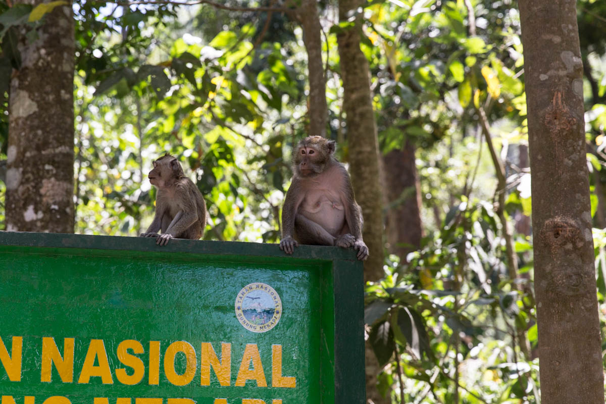 Monkeys sitting on a sign