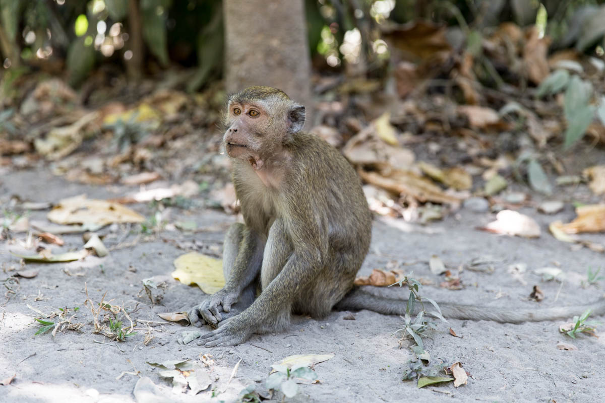 Poor monkey on its own